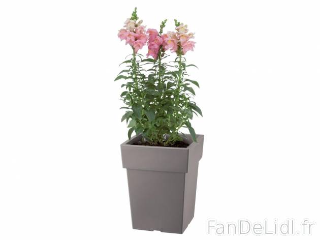 Pot pour plantes jardin fan de lidl fr for Catalogue plantes jardin