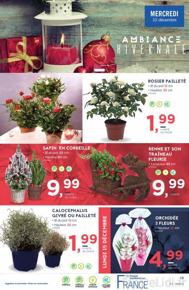 Fleurs et plantes no l fan de lidl fr for Catalogue fleurs et plantes