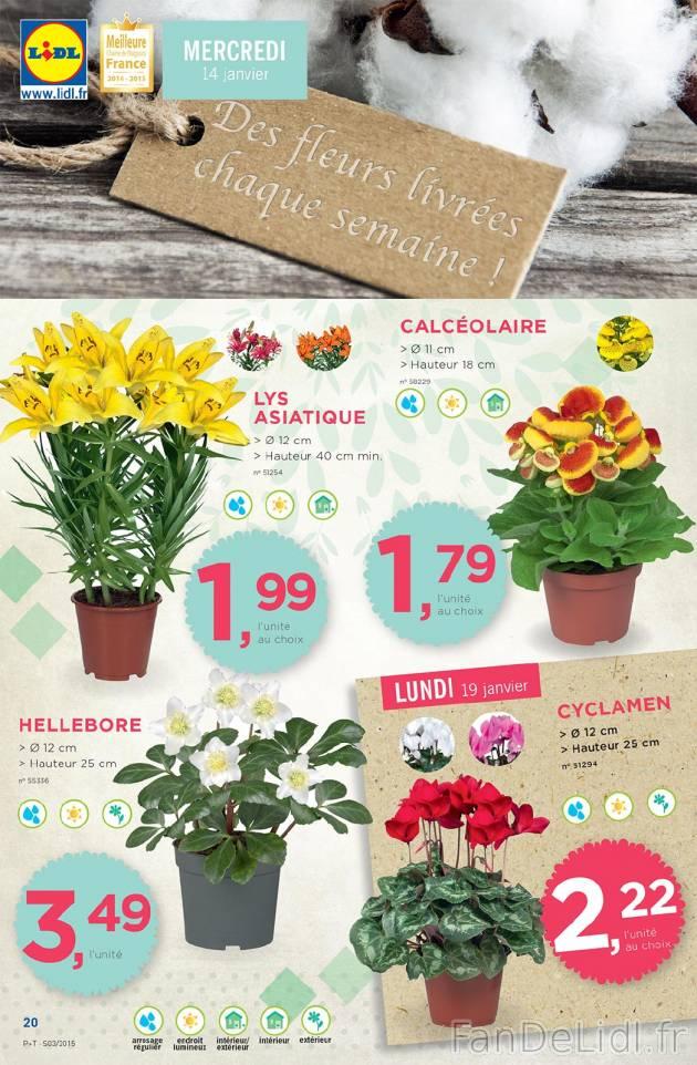 Fleurs fleurs fan de lidl fr for Catalogue de fleurs