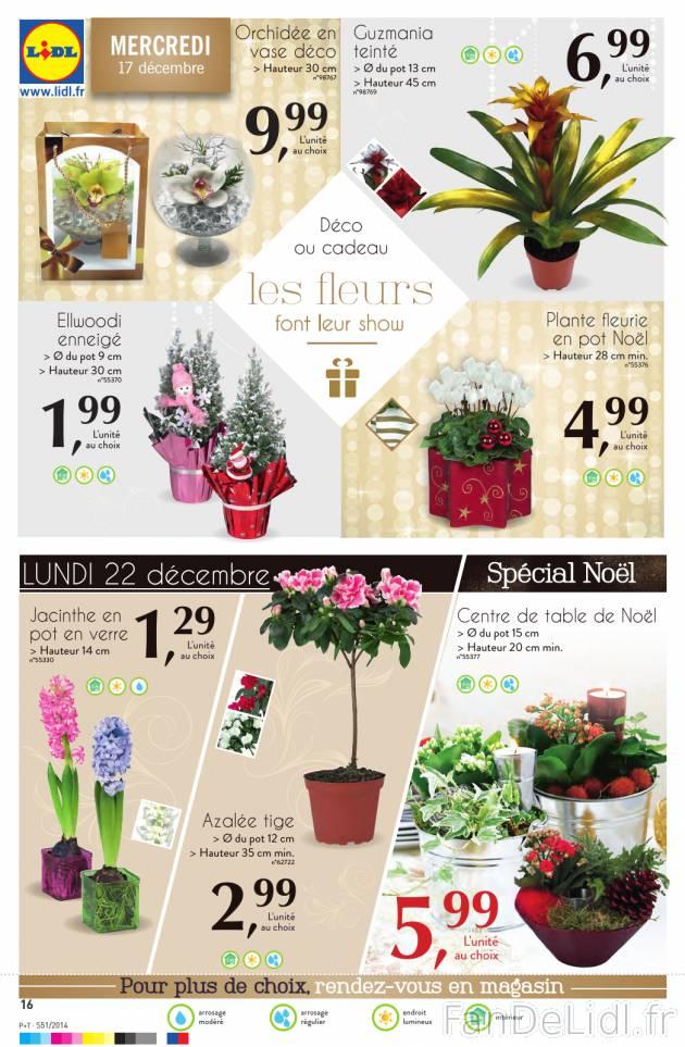 Fleurs et plantes fleurs fan de lidl fr for Catalogue fleurs et plantes